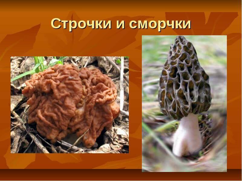 Осенний лес с грибами фото слайды клиентов