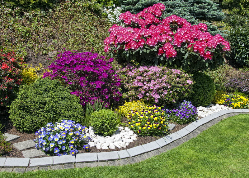 Некоторые виды многолетних цветочных растений для сада