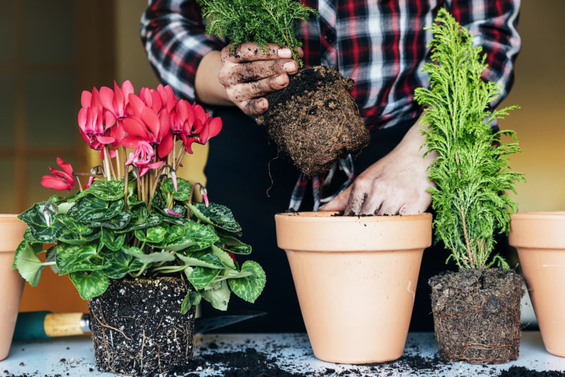 Что положить на дно горшка, чтобы растения росли как на дрожжах
