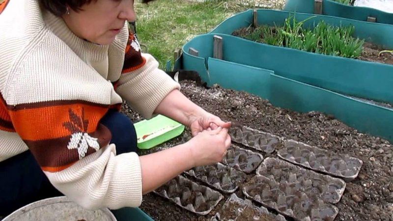 Лотки из-под яиц: применение на даче